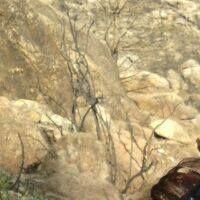annntia Profile Picture