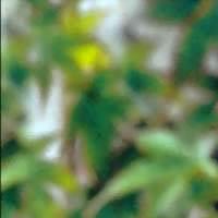 mareyiz Profile Picture